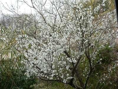 春 001_t