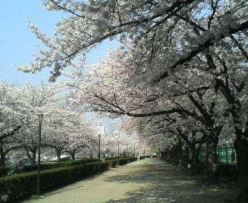春 021