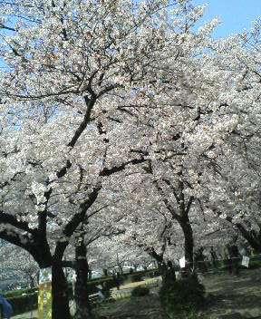 春 022