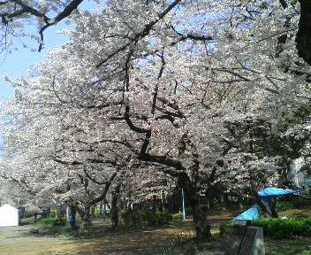 春 027