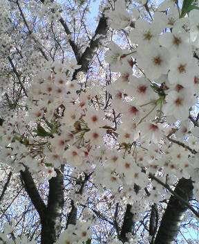 春 024
