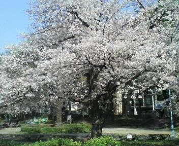春 028