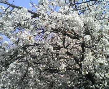春 029