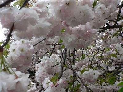 春 040_t