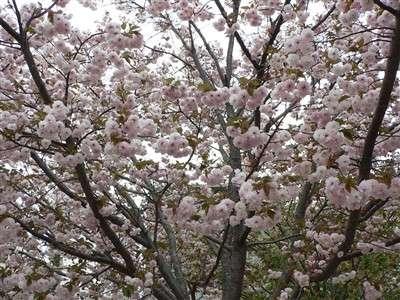 春 043_t