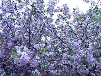 春 046_t