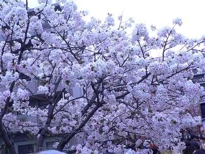 春 047_t