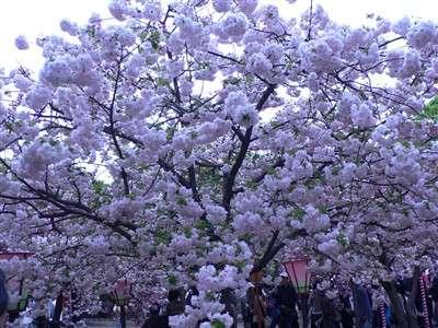 春 049_t