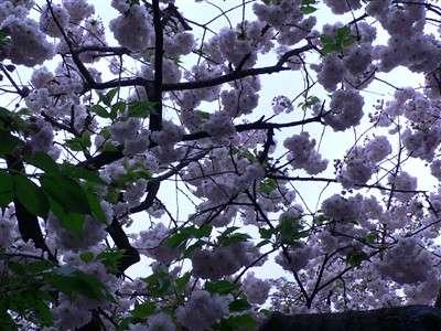 春 051_t
