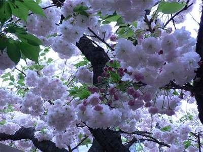 春 052_t