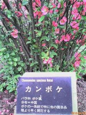 植物園 003_t