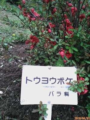 植物園 005_t