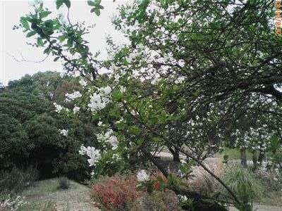 植物園 010_t