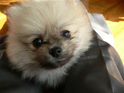 犬RC 001_t