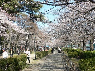桜、大川端 005_t