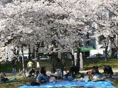 桜、大川端 006_t