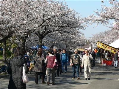 桜、大川端 007_t