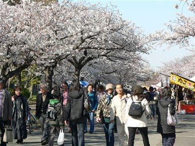 桜、大川端 008_t
